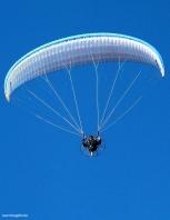 gliders-01