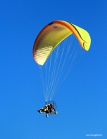 gliders-02