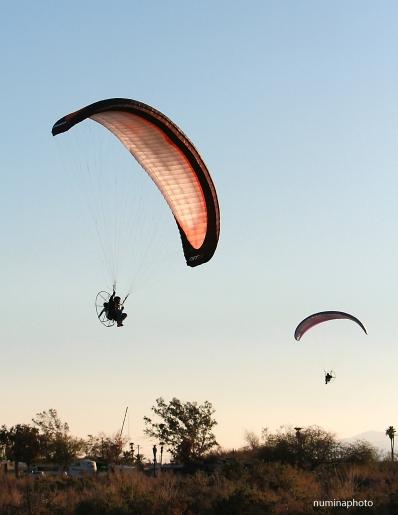 gliders-12