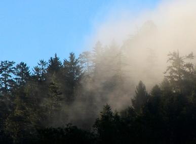 Fog iin trees