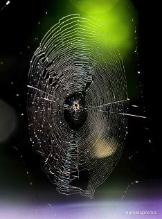 Spider web small