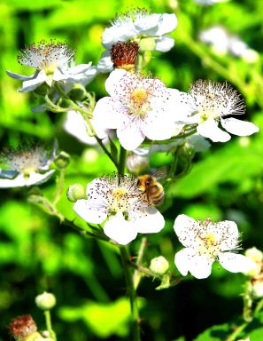 Bee and flower 1 small