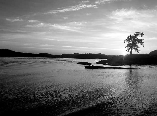 Lone Tree sunset b&w 1