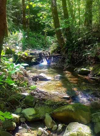 Garberville Stream in the redwoods small